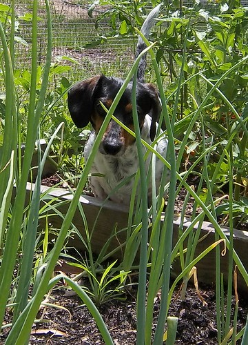 Jack in the garden