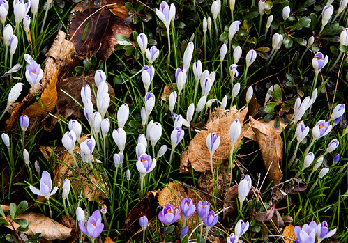 Fall 'n Spring 2
