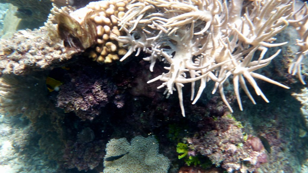Scuba Diving, Great Barrier Reef : Cairns, Australia