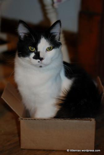 sprocket box 2-11-2012 5-42-36 PM