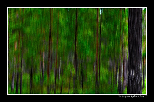 Forrest photo painting by ICM by Tor Magnus Anfinsen