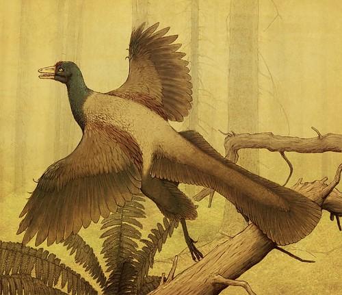 Archaeopteryx by Sheil