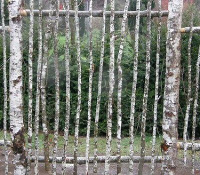 natural birch picket fence