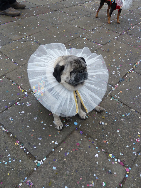 Even the doggies got into the dressing up!