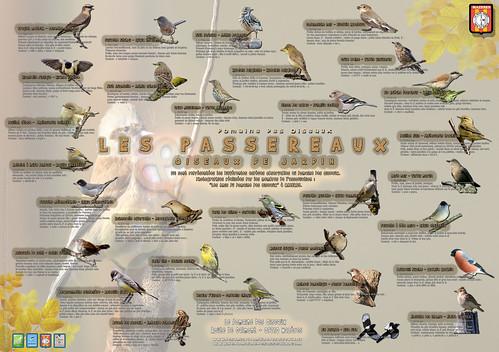 """Panneau Pédagogique """"Passereaux & oiseaux de jardins"""" N°2"""