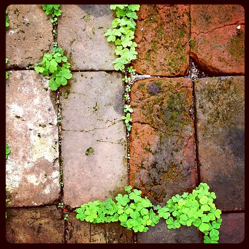 #marchphotoaday #green #clover #ilove #brick #outdoors #path #spring