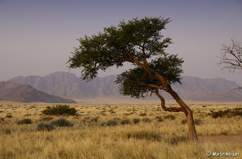 Sossusvlei Landscape by Martin_Heigan