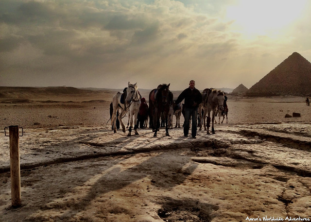 Bringing in the Horses at the Pyramids