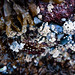Deep-Cove-Photowalk_MG_2579-Edit