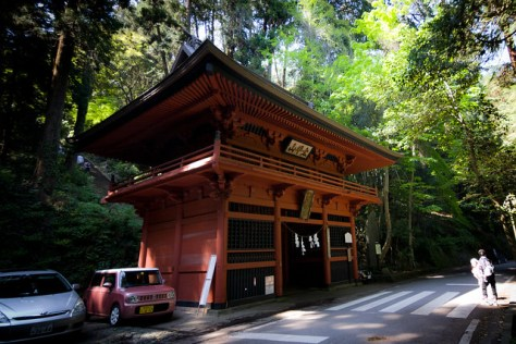 #15 The Honourable Sacred Cryptomeria of Oohirasan Shrine