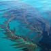 Beautiful Kelp