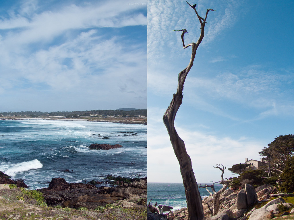 Ghost Tree, 17 Mile Drive, Pebble Beach