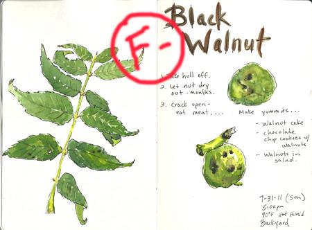 walnut_fail