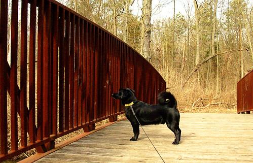 Simon on the bridge