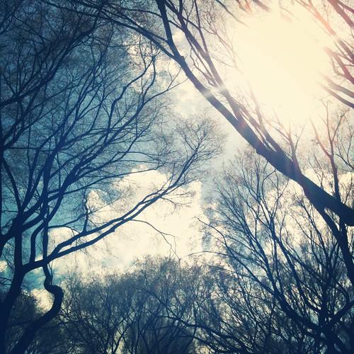 träd i central park