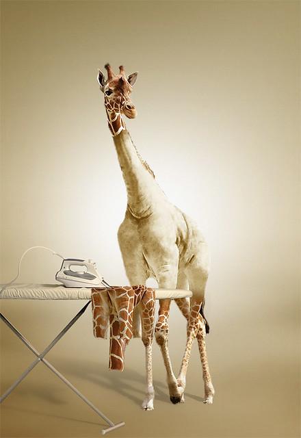 Manipulated Giraffe
