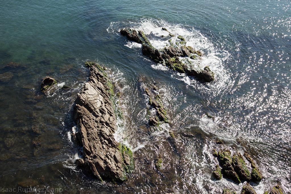Brote del mar