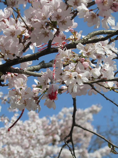 Spring in St James's Park