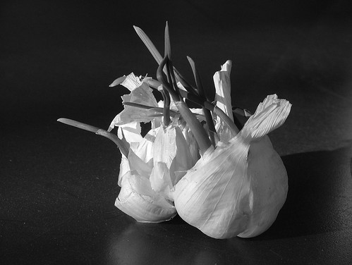 garlic in B&W