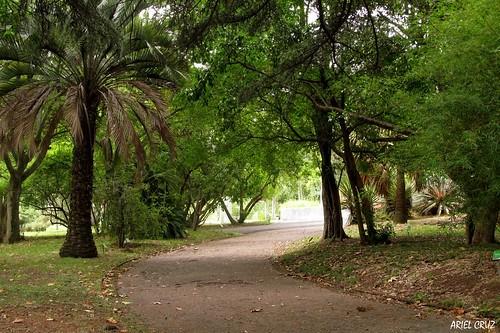 365-22 | Jardín Botánico Profesor Atilio Lombardo - Botanical Garden Professor Atilio Lombardo (Montevideo) | Amor - Love