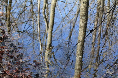 Reflections - Beaver Dam Swamp