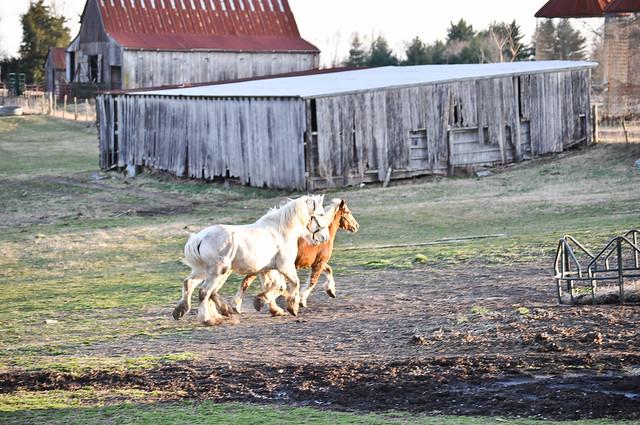 farmgirl-0179.jpg