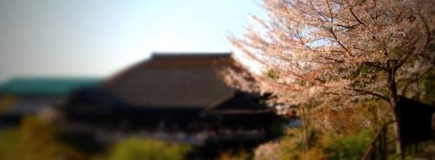 Kiyomizu Sakura