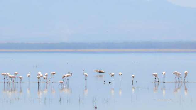 Lake Nakuru Birds 3