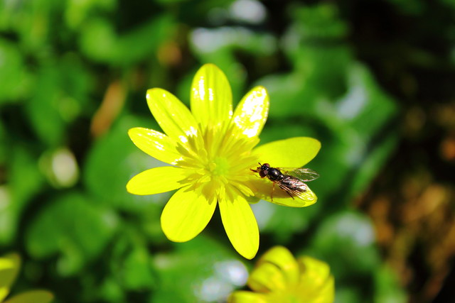 Dulce néctar #photography #photo #foto #flickr , DPP_0017
