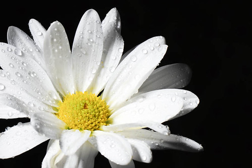 White on Black by Barb Phillips
