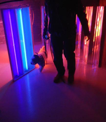 walking the dog at Illuminate Yaletown