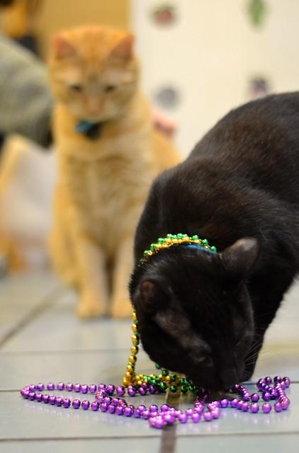 Luna Checks Out the Beads