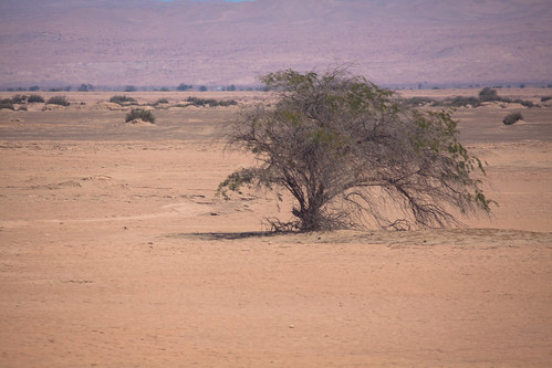 A lone tree in the desert