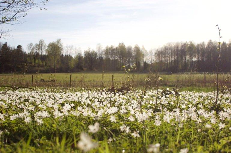 Vita fält - reaktionista.se