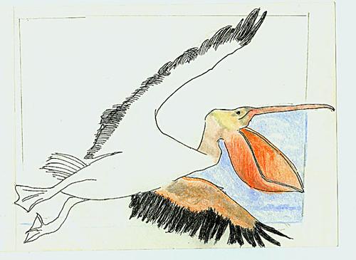 Flying pelican, WIP