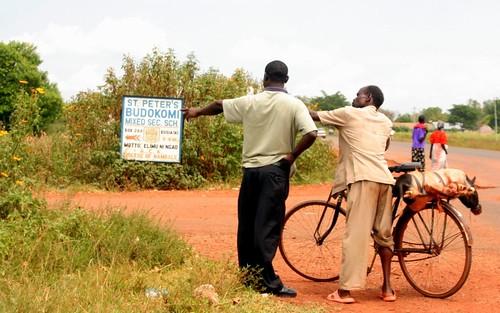 Pig transportation to the slaughter slab in Western Kenya