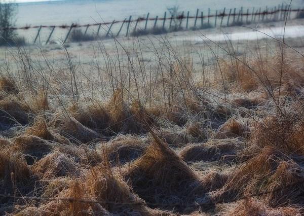 Le champ, la paille, l'herbe et le gel