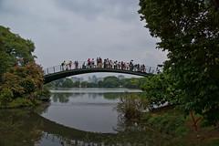 Ponte do Ipê