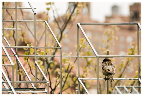 New York - Bird in High Line Park