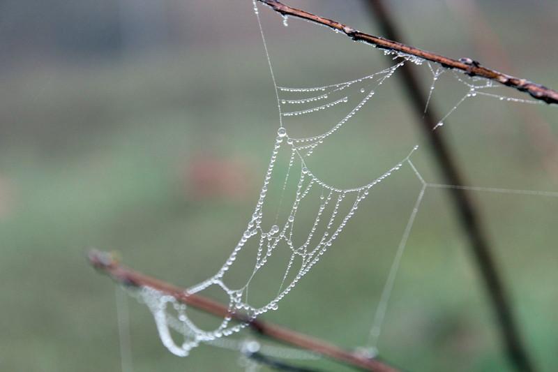 Spider Hammock