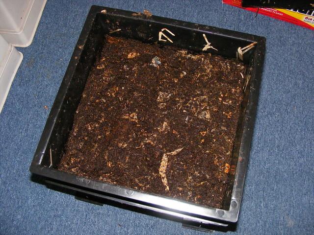 Dirt out (worm bin)