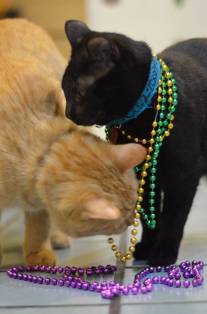 Beso Checks Out Luna's Beads
