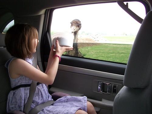 TN safari park 17