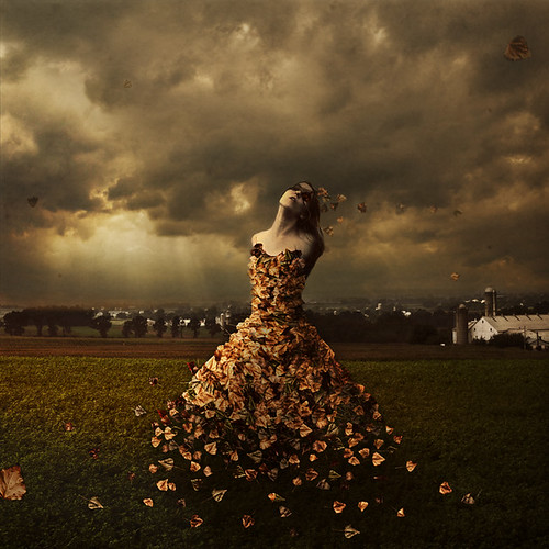 the leaves of linden avenue by brookeshaden