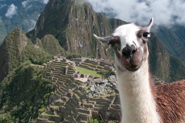 Machu_Picchu-38