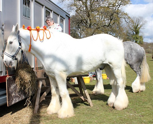 Southern Counties Heavy Horse Event, Ringwood, Hants