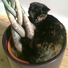 tree-lover-cat