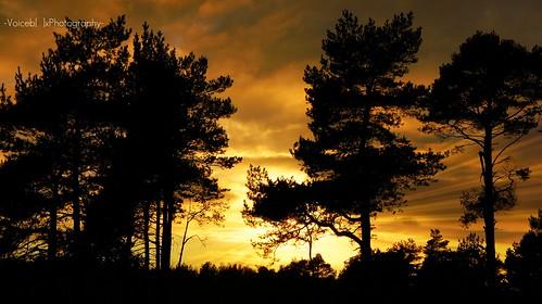 Sun amoungst Tree's