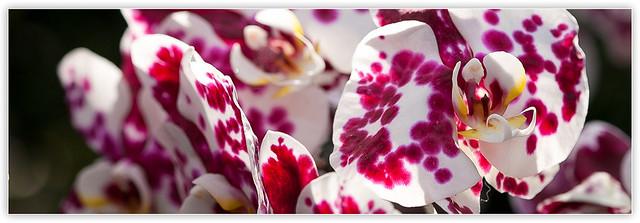 春季蘭花展