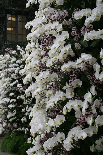 White Orchid Columns